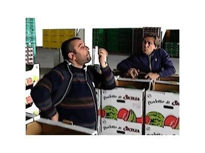 vendita ingroso Masterfruit