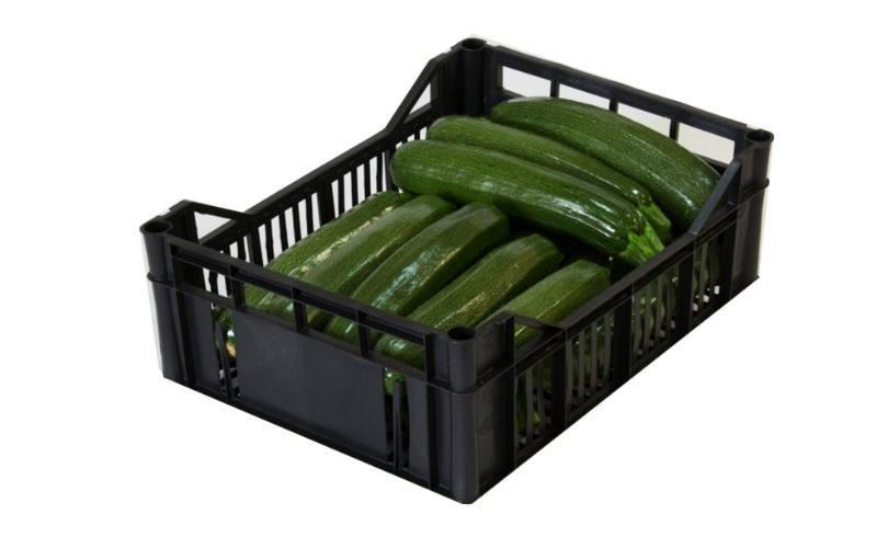 cassetta di zucchine Master Fruit