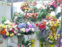 dei vasi con dei fiori colorati