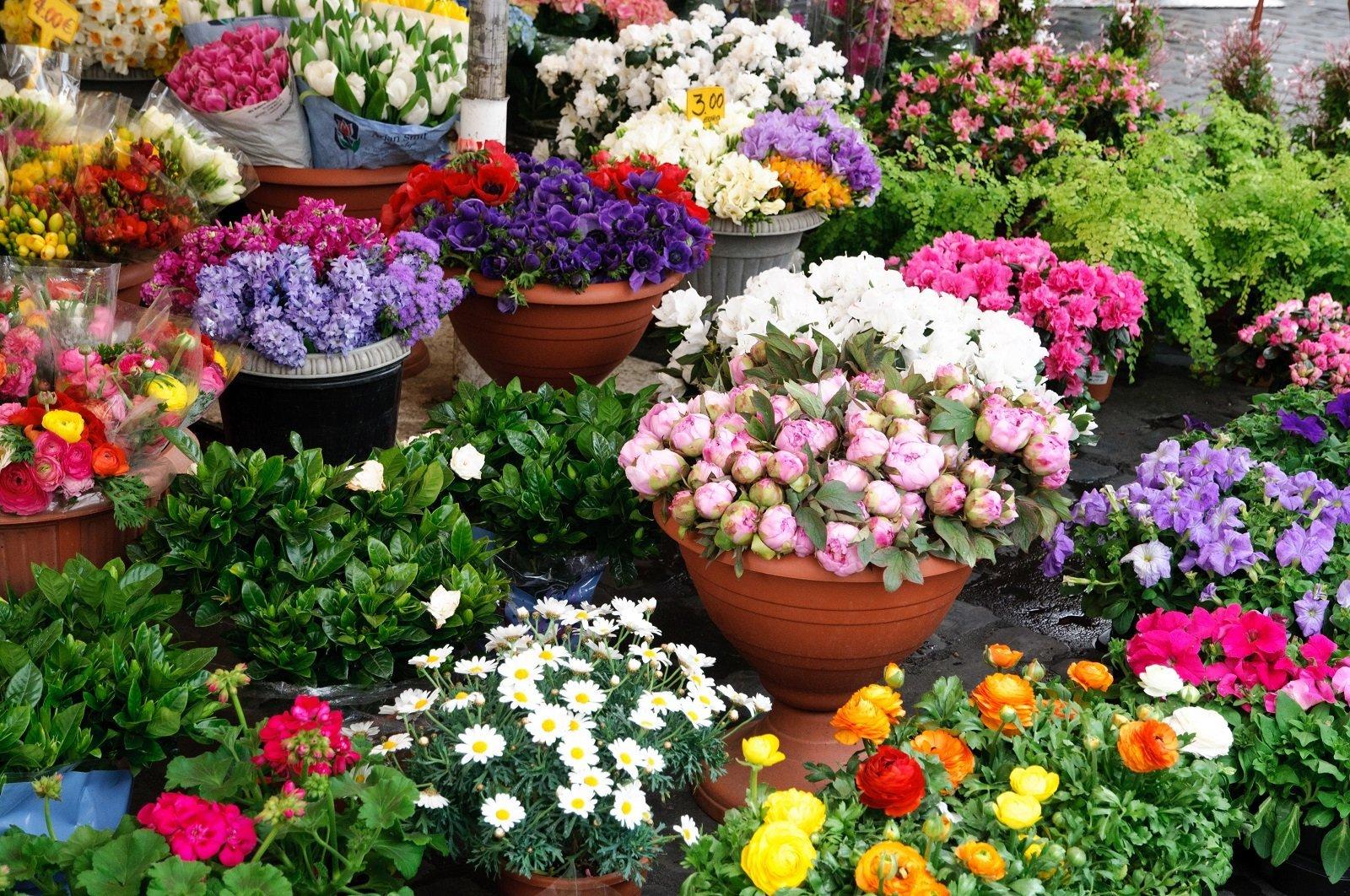 dei vasi di fiori colorati