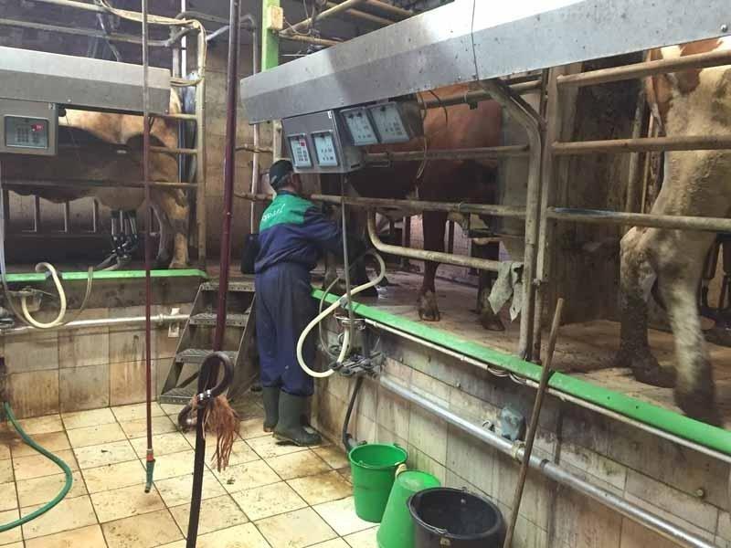 produzione di latte