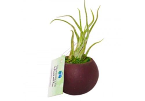 un vaso con una pianta