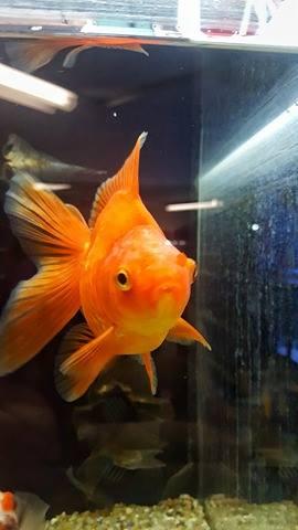 un acquario con un pesce rosso