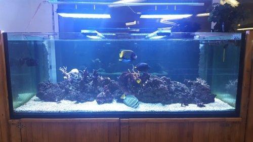 Corals fish vendita acquari concorezzo mb for Acquari particolari