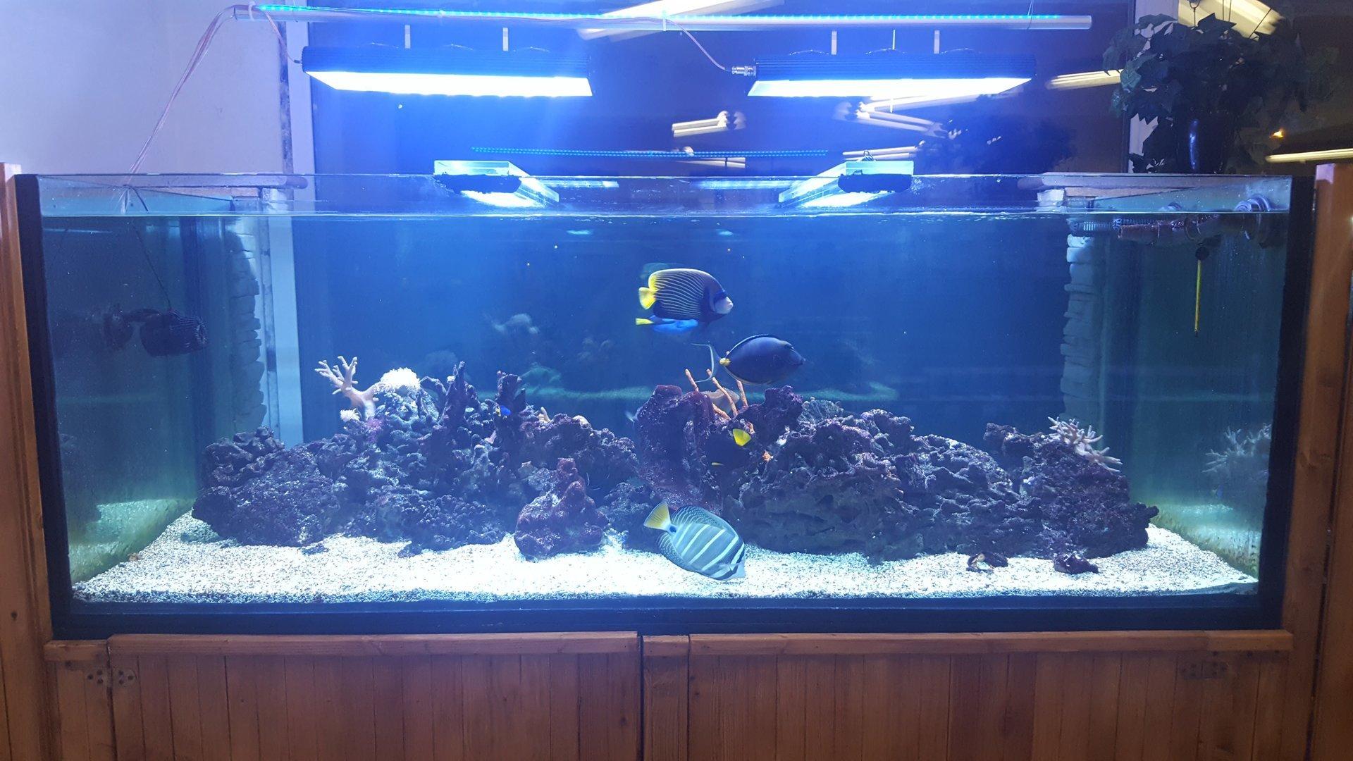 un acquario con coralli e pesci