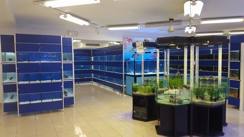 interno di un negozio di acquari