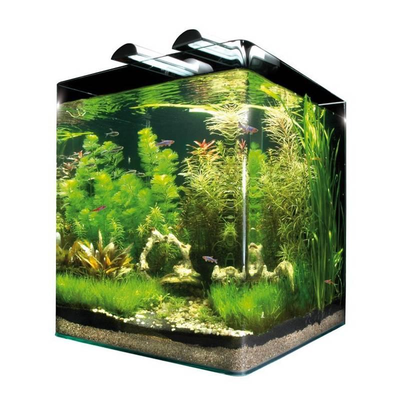 un acquario con alghe e piante