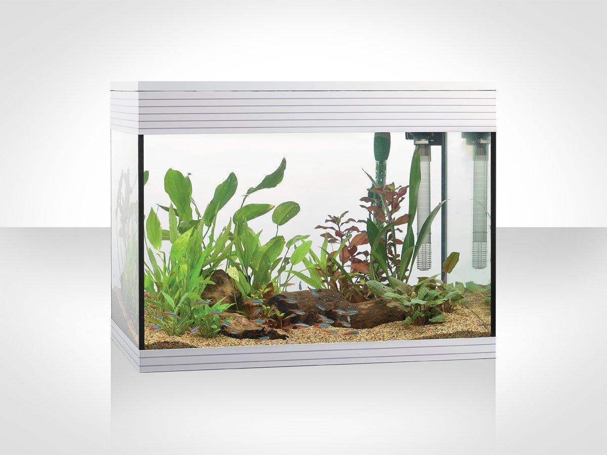 un acquario grigio con delle piante