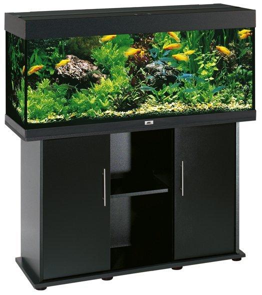 un acquario con dei pesci colorati