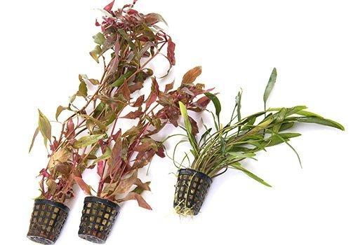 delle piante dentro a dei vasi a muro