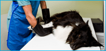 Chirurgia per animali