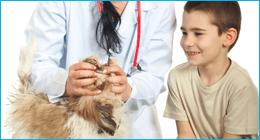 emergenza veterinaria, veterinari per animali da compagnia