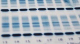 analisi biologiche