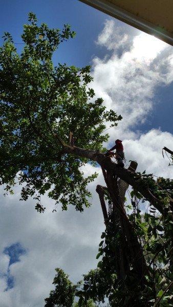 Stump Removal Oahu Hi Ohana Tree Services
