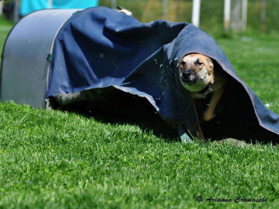 Addestramento cani - Cascina Crimea
