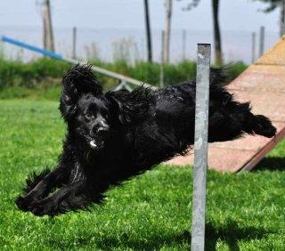 CENTRO CINOFILO DOG SPORT CRIMEA