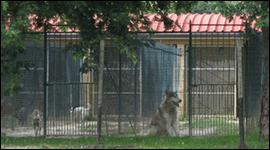 box pensione cani