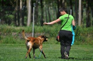 educazione per cani