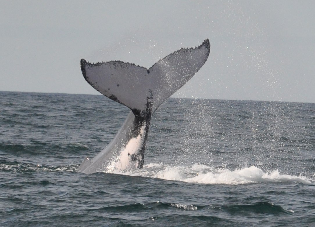 View of whale in Sydney waters