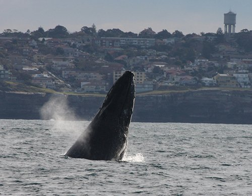 View of the whale