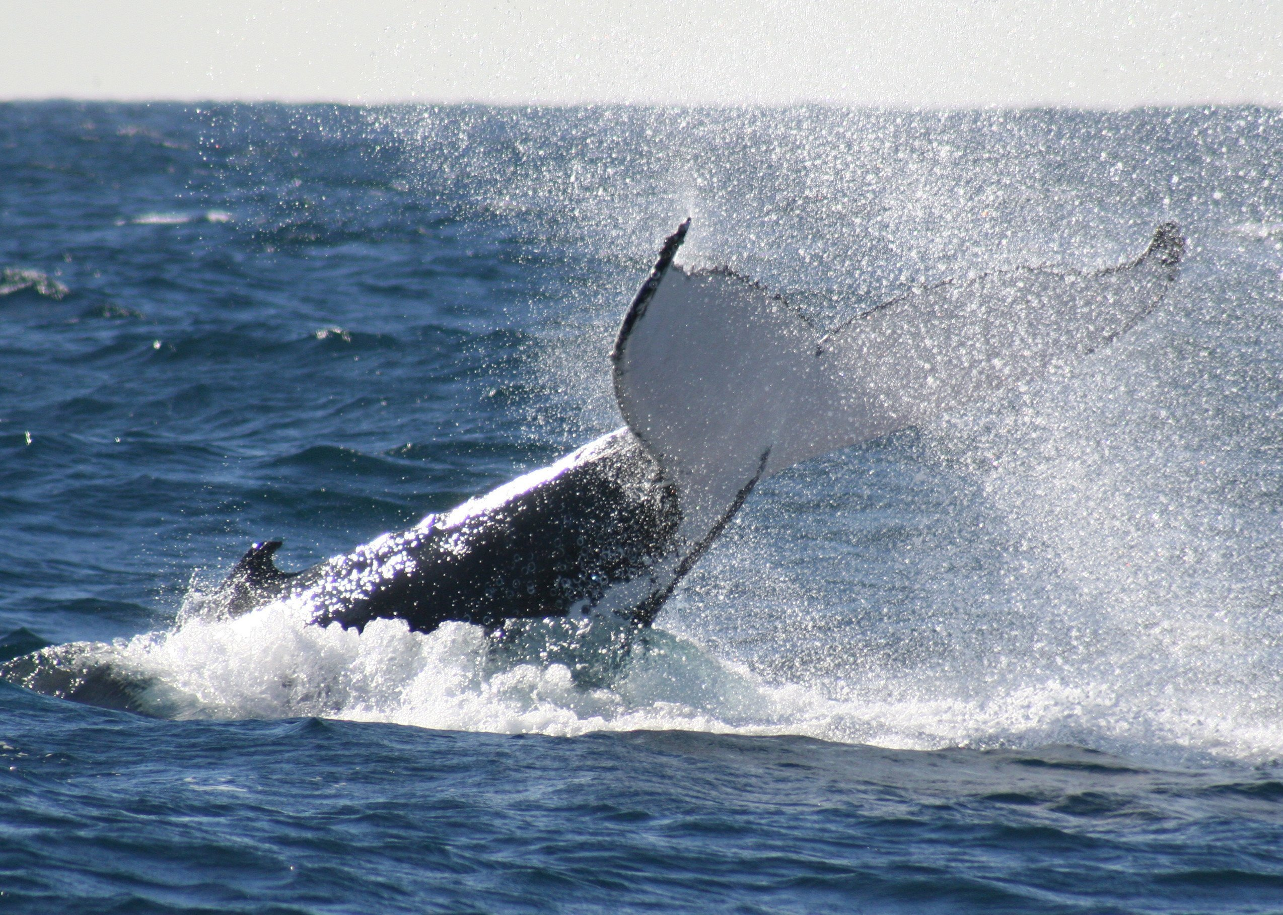 View of a whale in Sydney waters