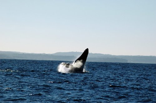 View of a whale