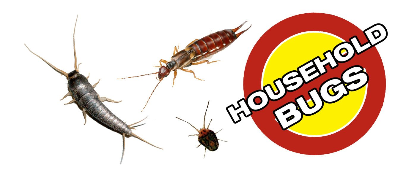 House Bug Removal