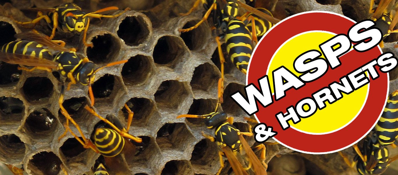 Wasp and Bee Removal
