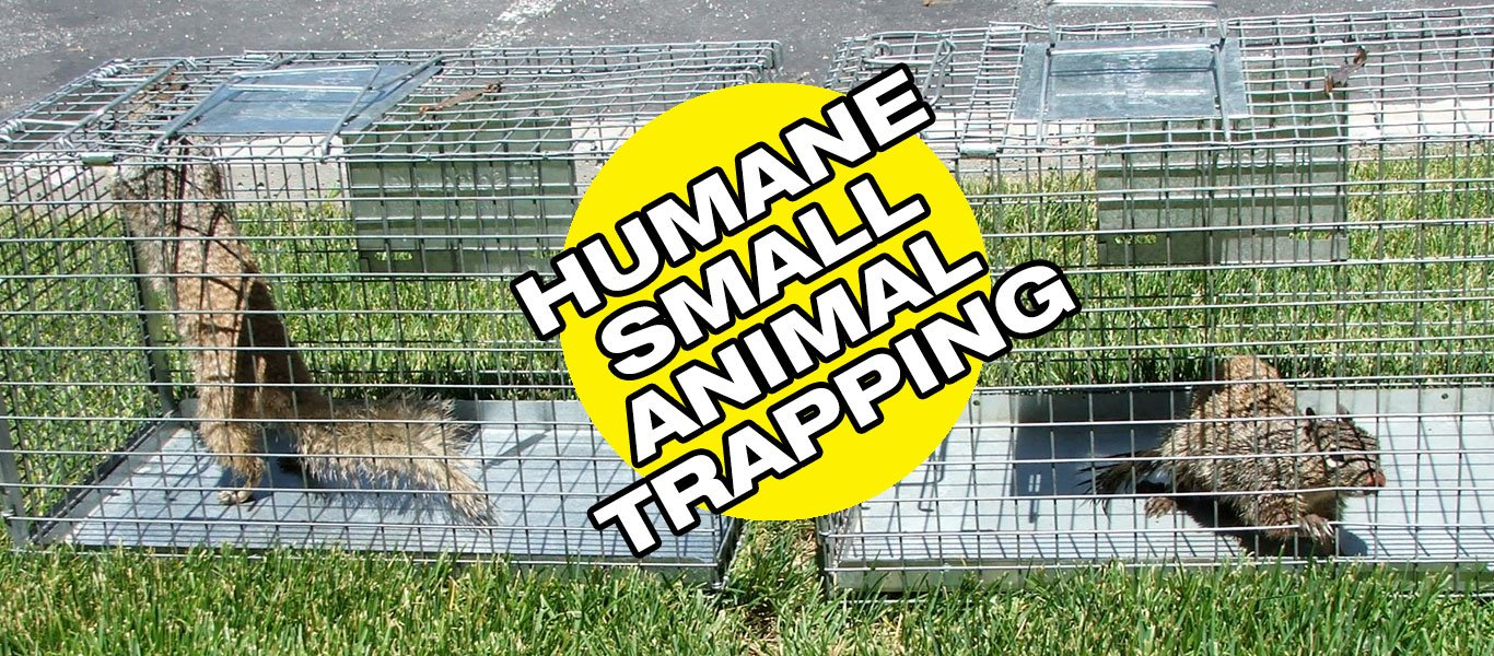 Humane Small Animal Trapping