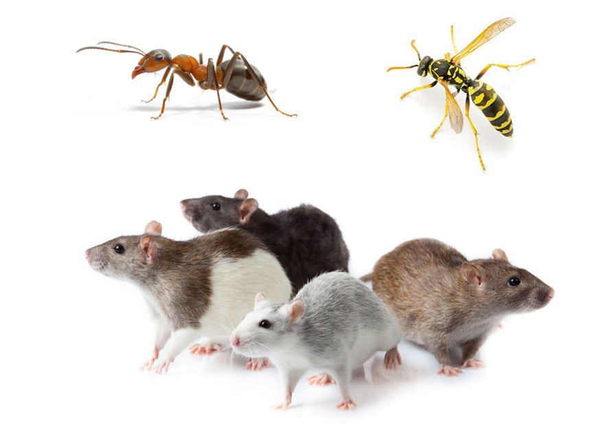 Removal of Rodents, Crawling Insects & Flying Insects.
