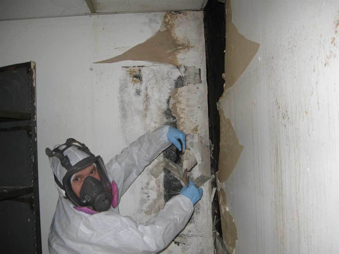 Mold Removal: The Start