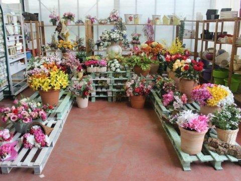 Piante ornamentali per esterni
