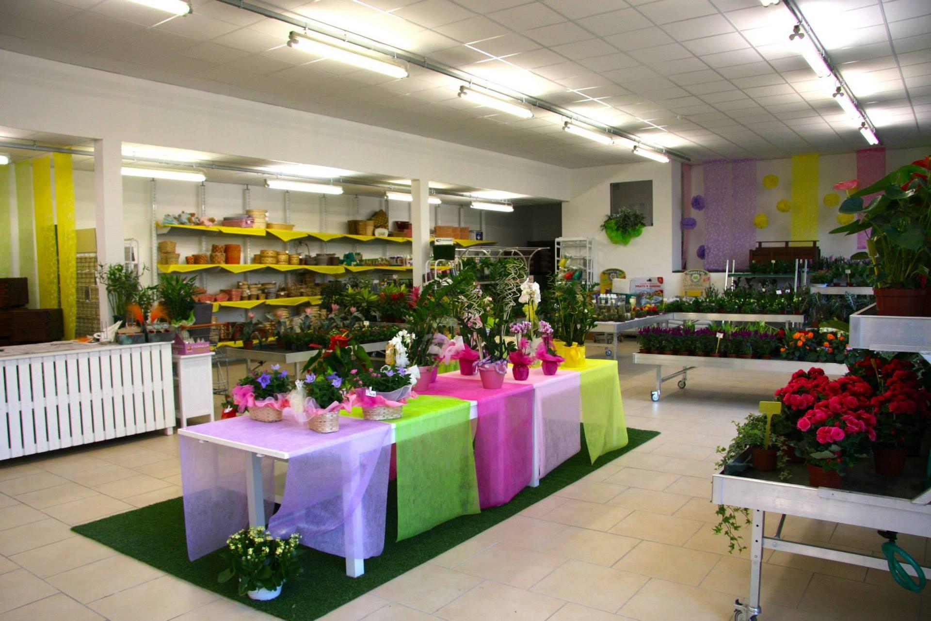 Composizioni floreali e piante per cerimonie