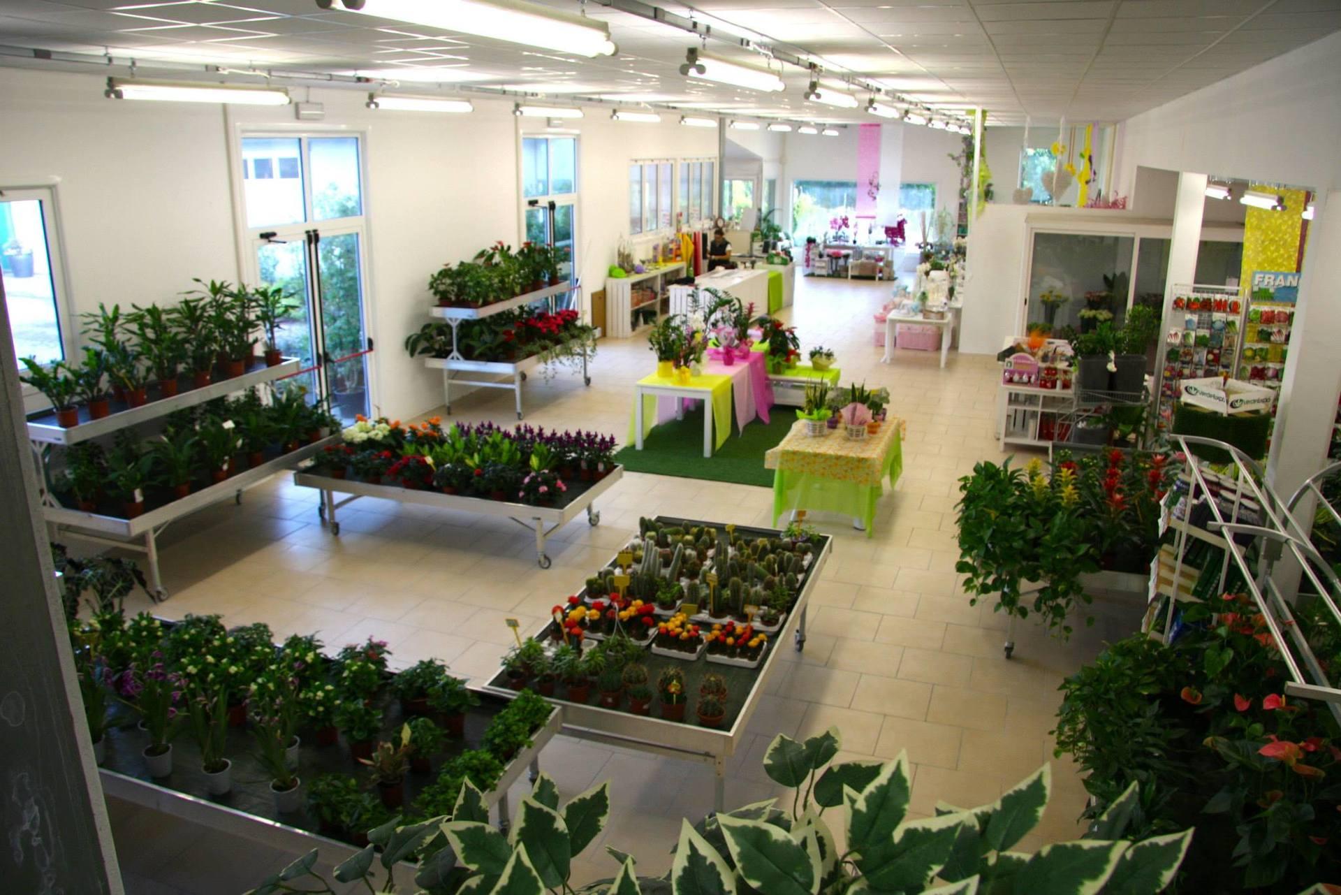 Assortimento di piante e fiori da giardino