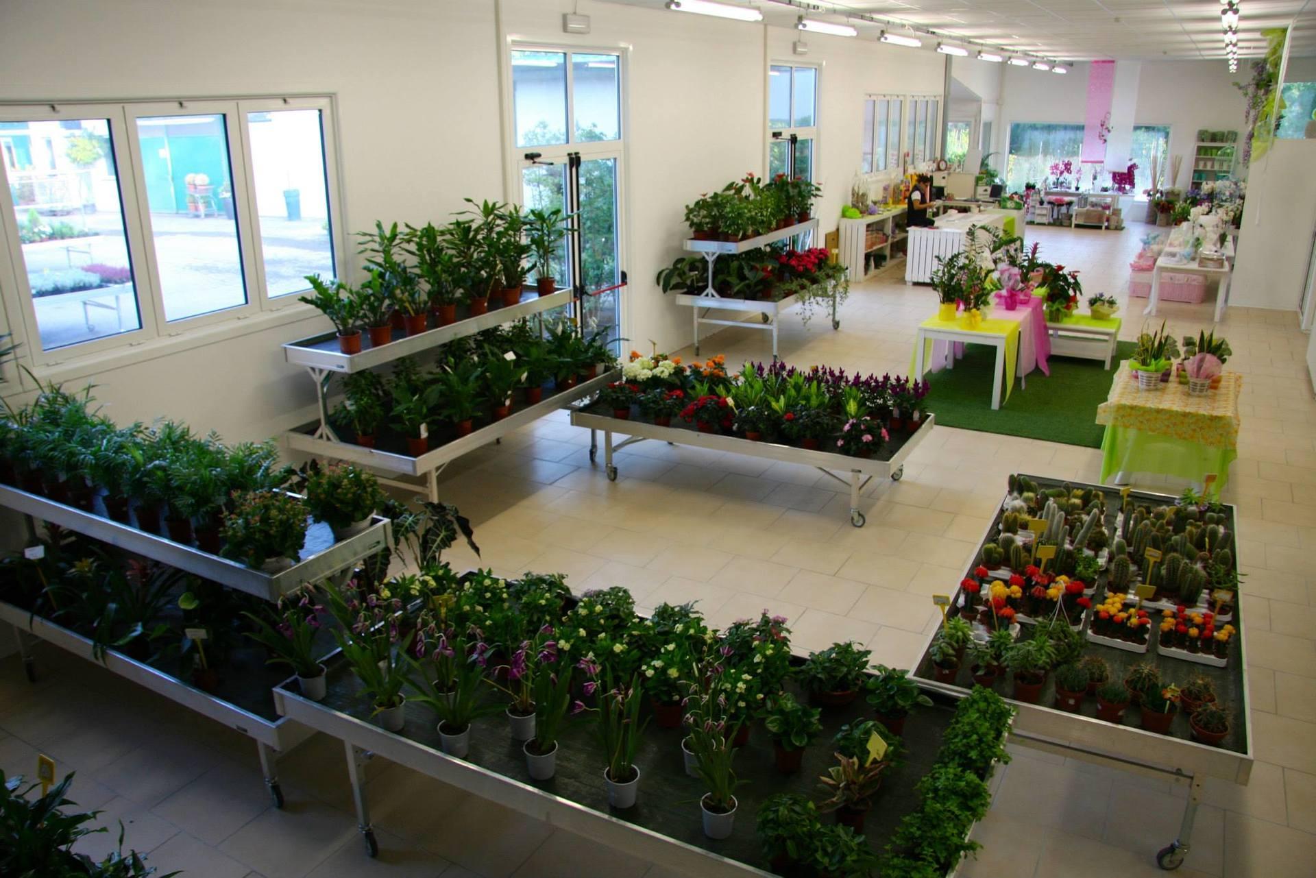 Ampia scelta di piante ornamentali