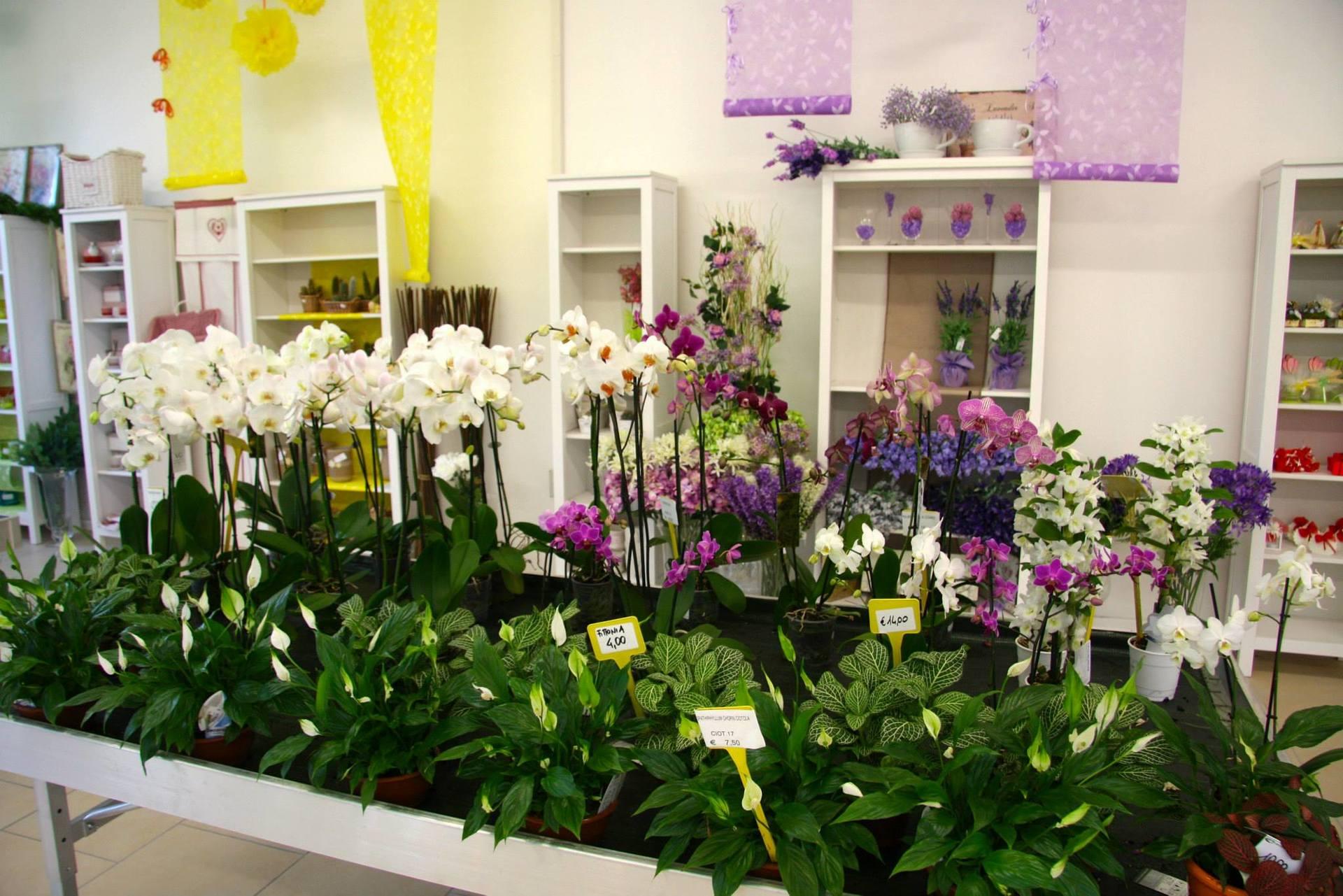 Piante di orchidee bianche
