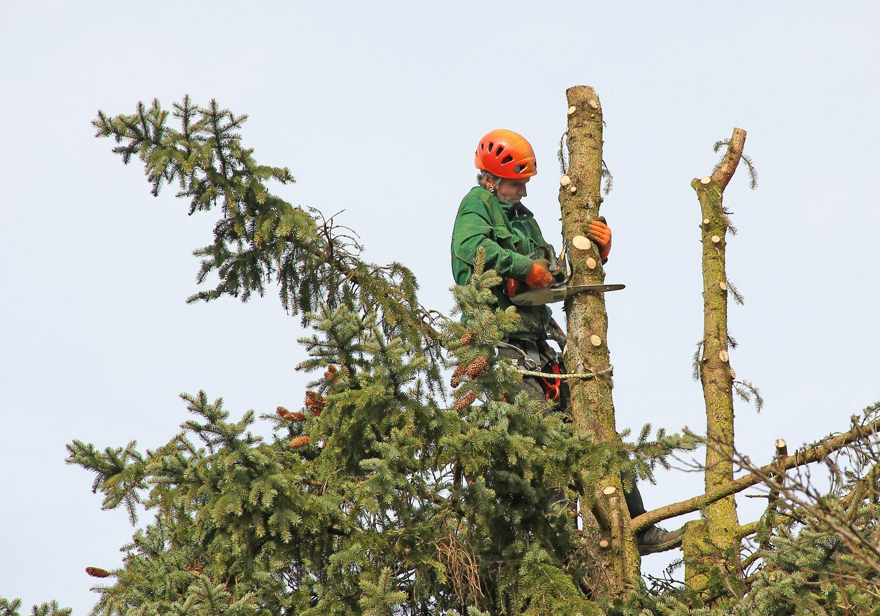 un uomo su un albero mentre sega il tronco