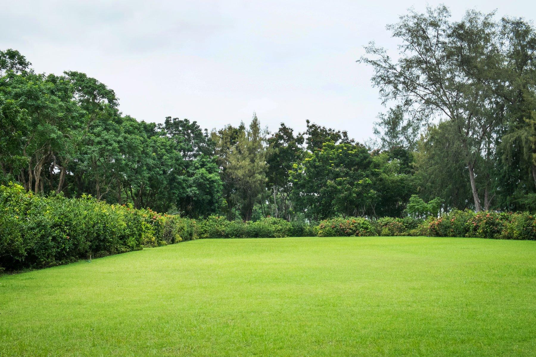 vista di un prato circondato da alberi