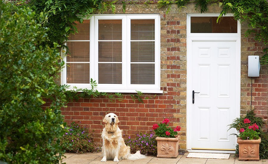 Window and door with dog in foreground