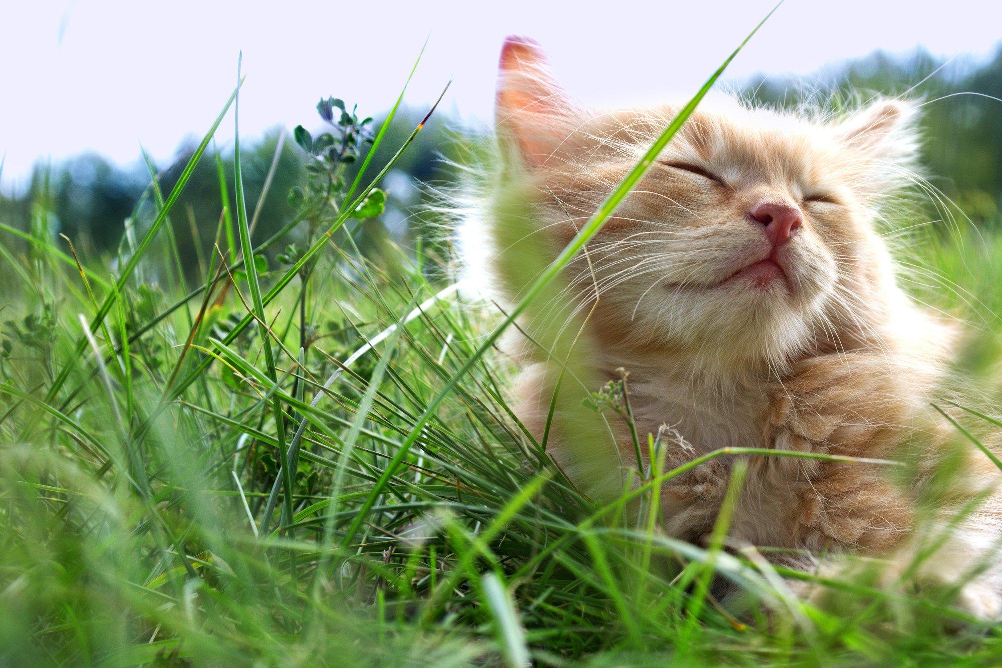 cat sleepy in a garden meadow