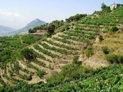 Produzione e Vendita Vini tipici Liguri