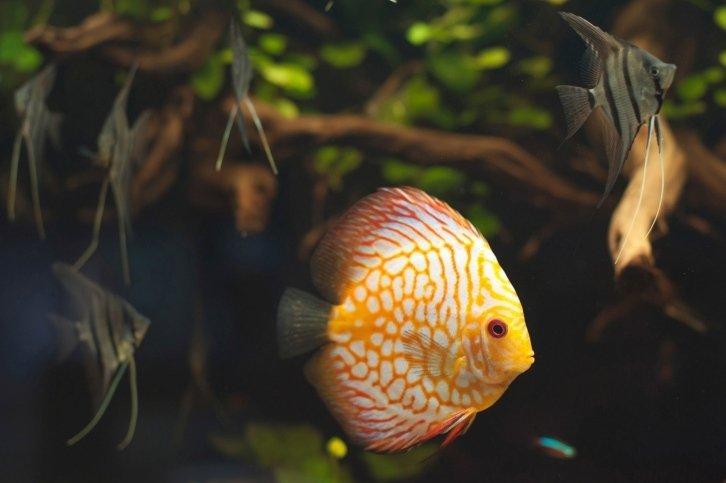 vendita pesce vivo per acquari