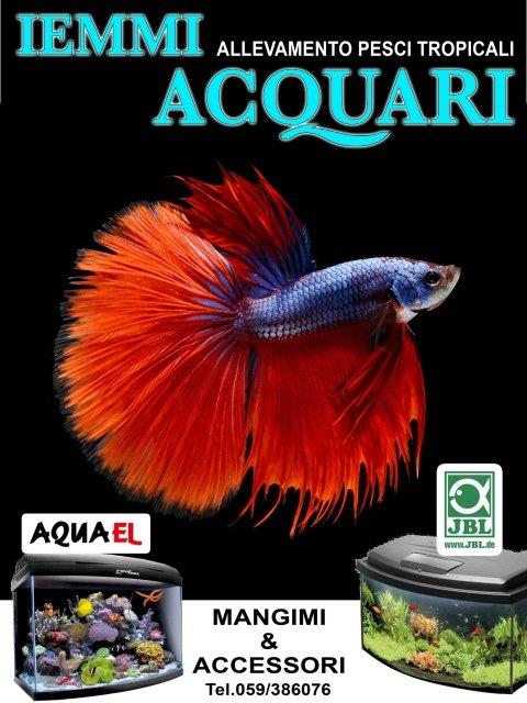 Vendita acquari e pesci tropicali modena ganaceto for Vendita on line pesci tropicali