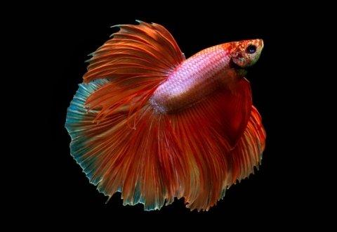 Iemmi Ermanno - Allevamento pesci tropicali