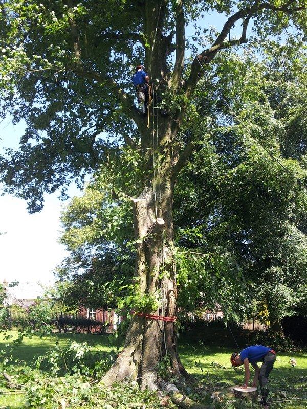 a shabby tree