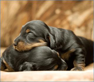 cuccioli di cane, cuccioli di gatto, vendita volatili