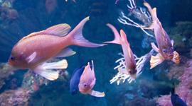 pesci tropicali, pesci per acquari, mangimi per pesci