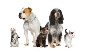 Nail clipping - Edinburgh, Central Scotland - Top Tails Grooming Room - Pets