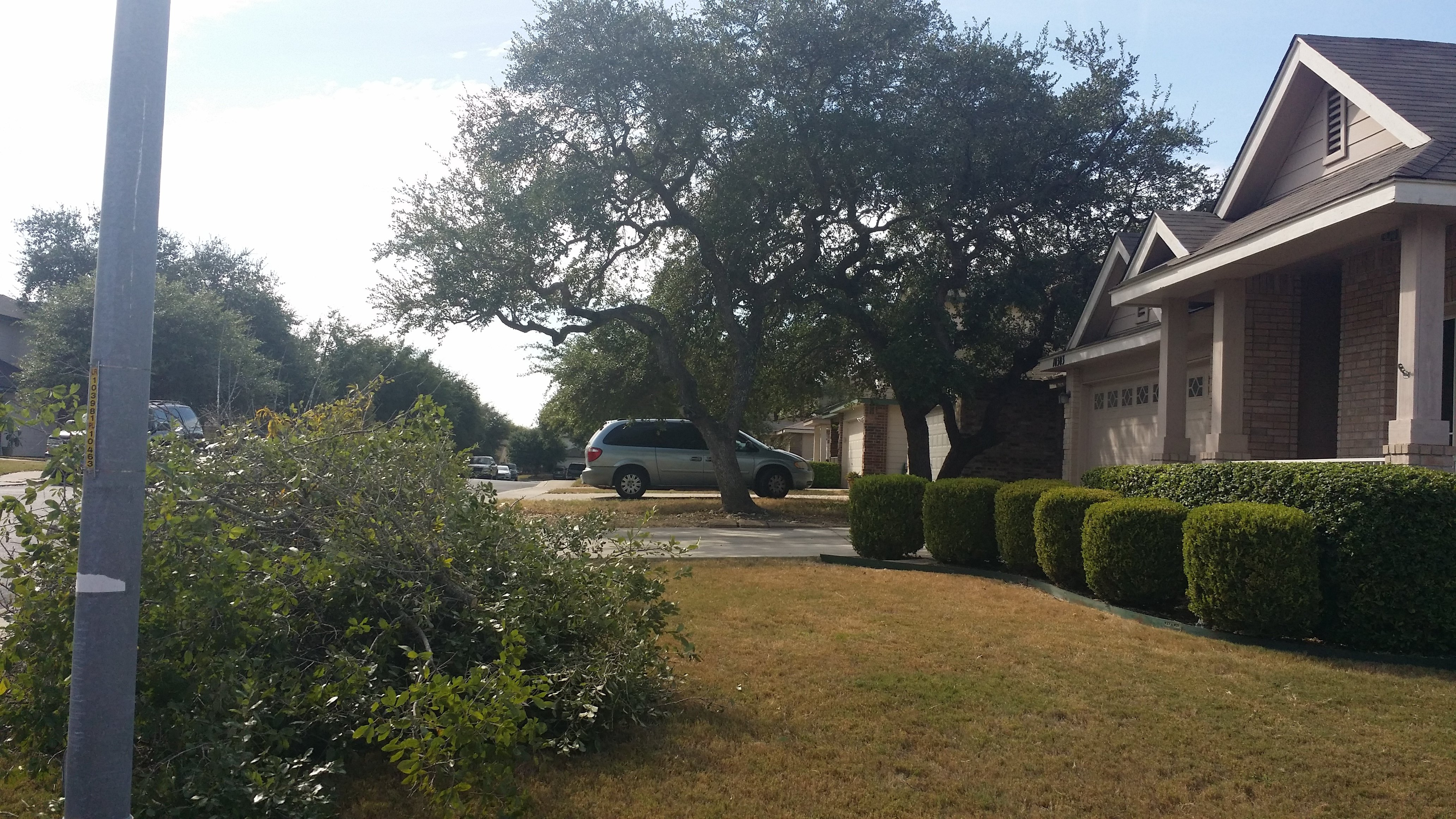 Tree Removal in San Antonio, TX