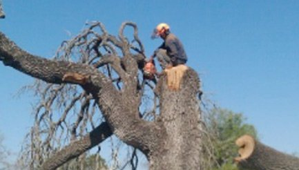 Dangerous Tree Removal in San Antonio, TX